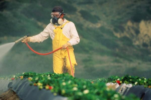12 sayur buah terkontaminasi pestisida, beras arsenik…