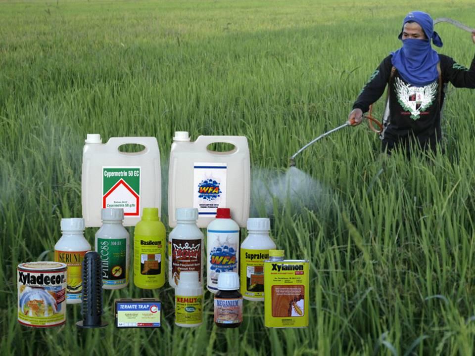 Perempuan, Pestisida dan Resiko Kehilangan Nyawa