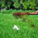 Manfaat Pertanian Organik