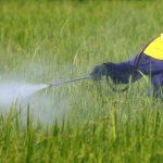 Paparan Pestisida