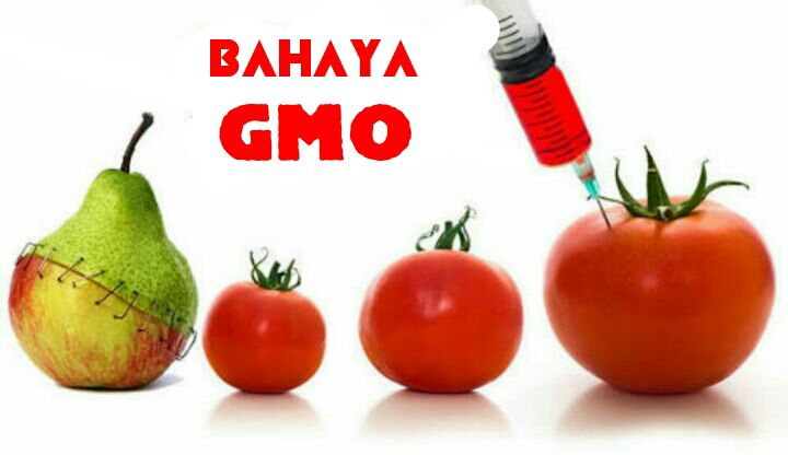 GMO – OMG !!