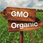 Bibit GMO VS Bibit Organik