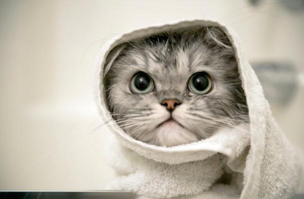 Manfaat VCO untuk Kucing Kesayangan Anda